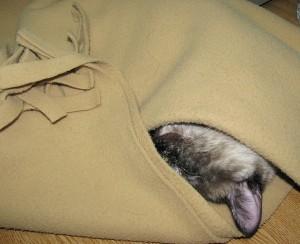 Texto 015 - Maria dorme na manta