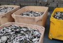 Polícia Marítima foi à 'pesca' de sardinha