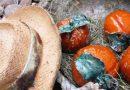 """Exposição de cerâmica """"Tesouros da Natureza"""" em Silves"""